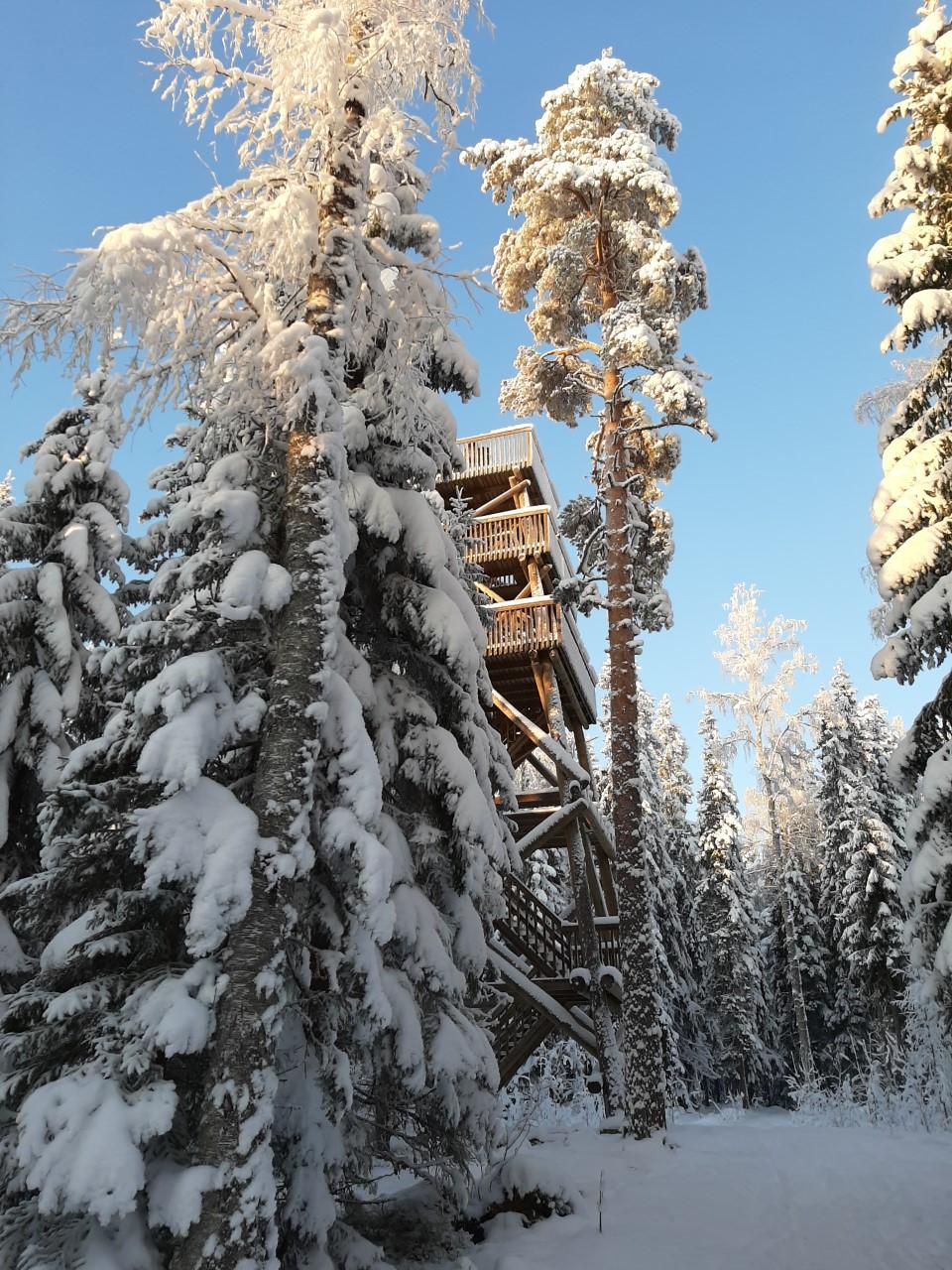 Pörönmäen hiihtoladut, laavu ja Pöröntorni